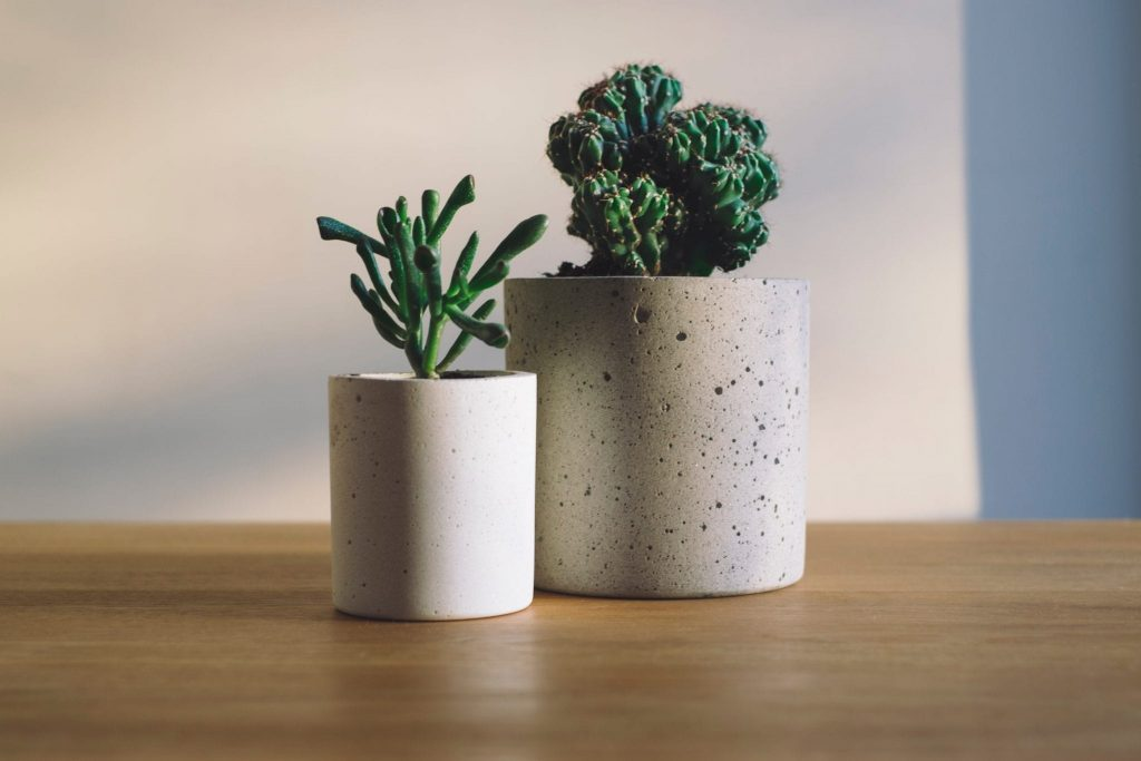 Successful Caring for Your Houseplants